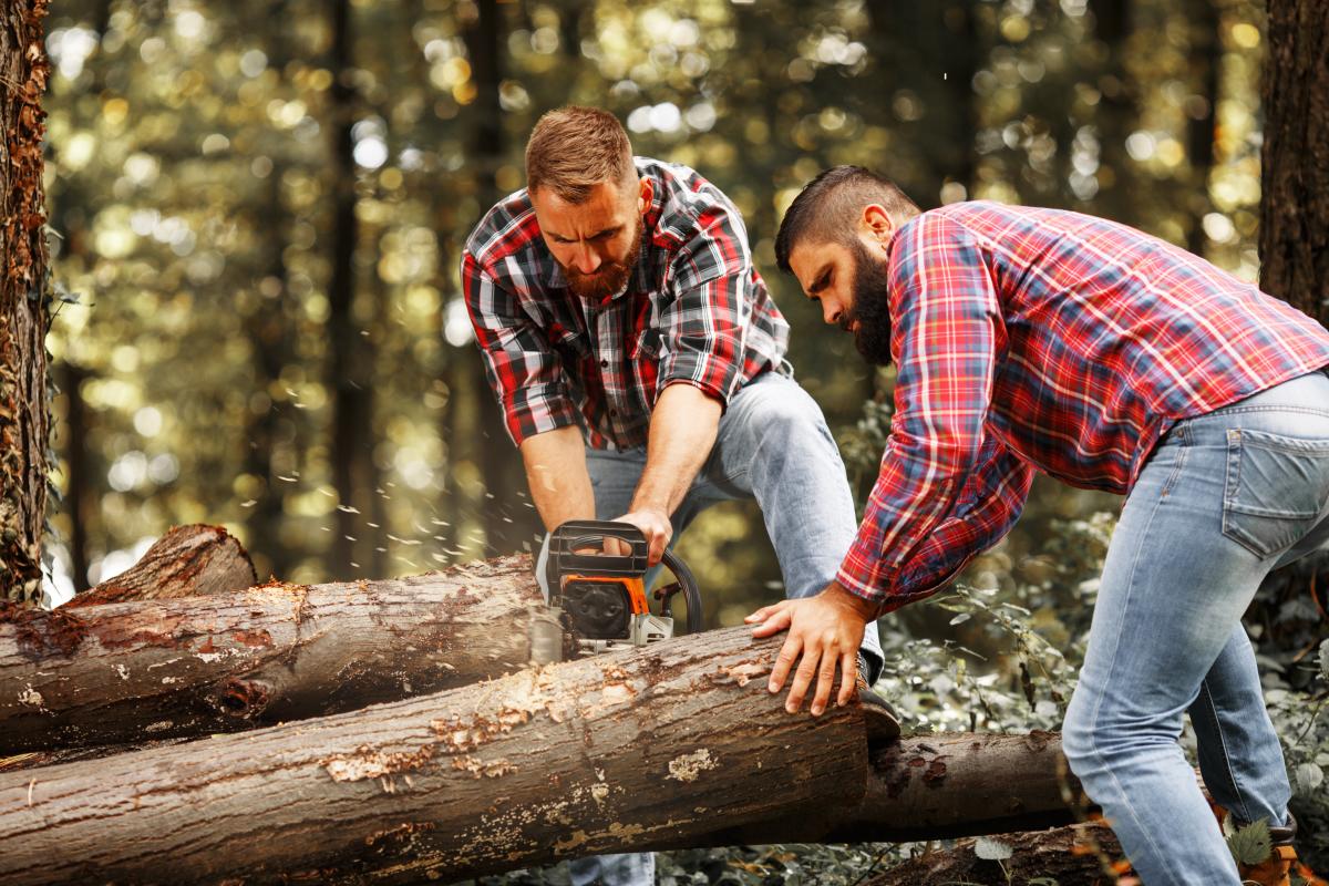 Immobilier durable – Des bûcherons en train de couper un tronc d'arbre
