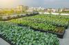 Immobilier durable  –  Des potagers urbains installés sur des toits d'immeubles