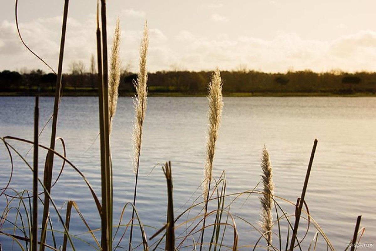 ou vivre autour de Toulouse en famille  - vue sur un lac à Tournefeuille